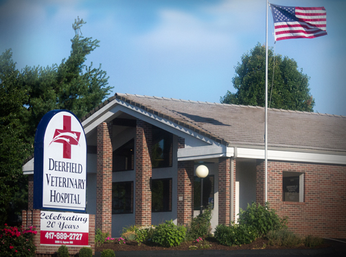 Full service pet hospital in Springfield, MO - Deerfield Veterinary Hospital