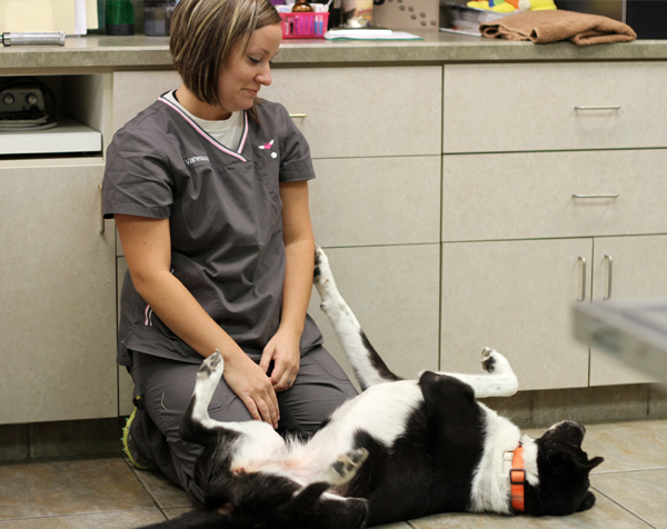 Preventive health and wellness for pets - Springfield, MO - Deerfield VeterinaryHospital