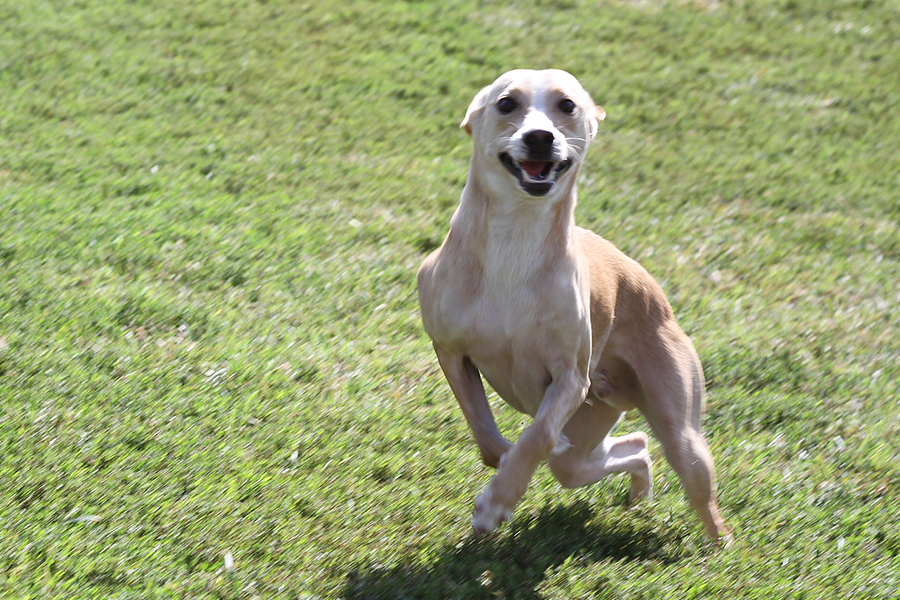 Pet Wellness - Springfield, MO - Deerfield Veterinary Hospital