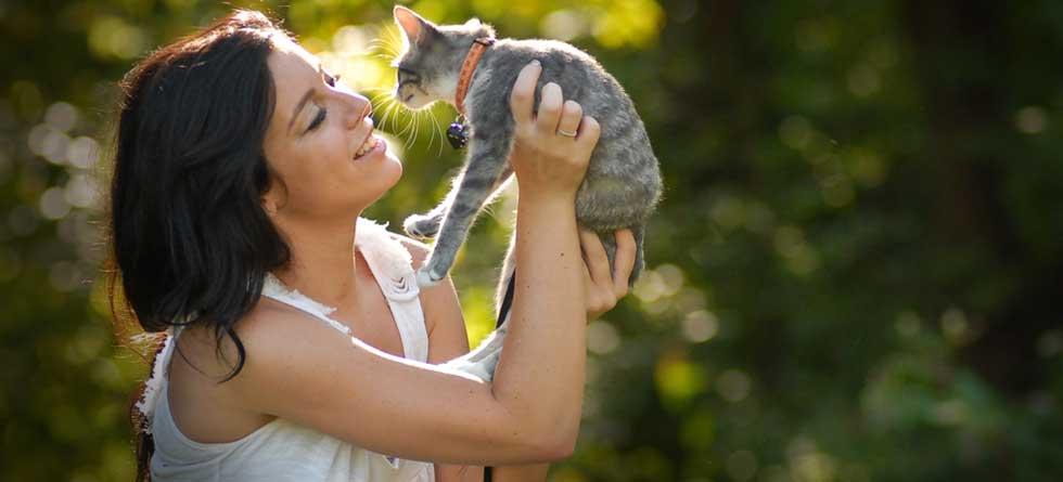 veterinarian-springfield-mo-kitten