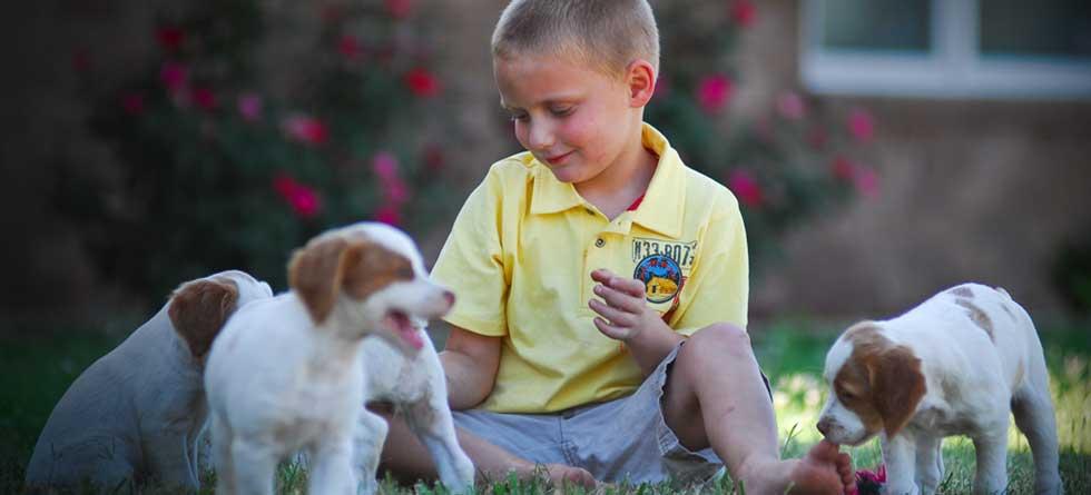 Puppy Veterinarians - Springfield, MO - Deerfield Veterinary Hospital