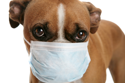 Dogs Kennel Cough Video