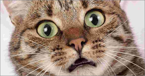 veterinarian-springfield-mo-frightened-cat-feature-image