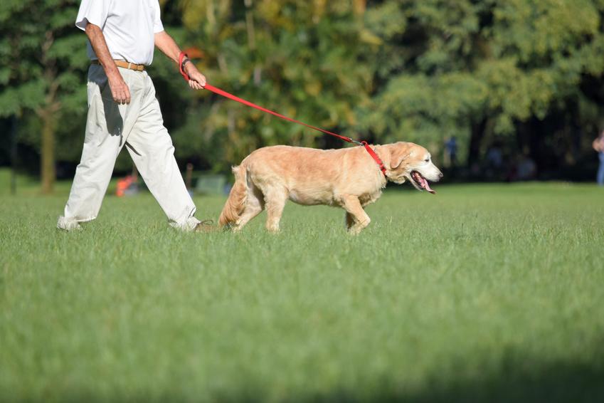 Senhor levando seu cachorro passear