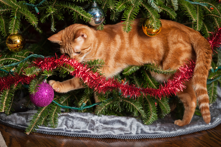 Naughty kitty playing with a Christmas ornament under a tree