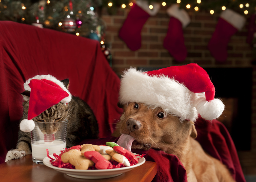 Cat and Dog eating and drinking Santa's cookies and milk. How to protect your pets from holiday hazards.